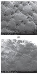شکل - 6 عک سهای SEM نمونة ) a( عم لآور ینشده، ) b( روک ششده از طریق پلاسما با استفاده از %100 HMDSO در زمان عملیات پلاسمای 90 ثانیه و توان پلاسمای 80 وات ) .)×100
