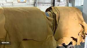 نقش پوست خام در کیفیت بخشی صنعت چرم